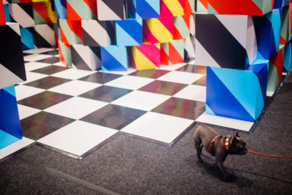 A dog walking around large scale colorful installation