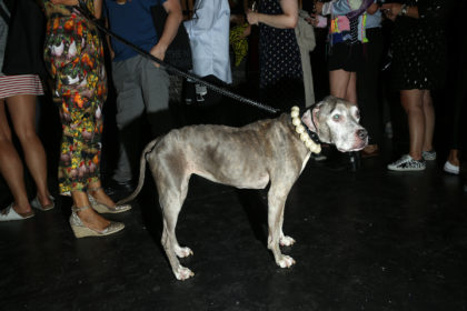 Lucy the dog with a pearl collar at the opening